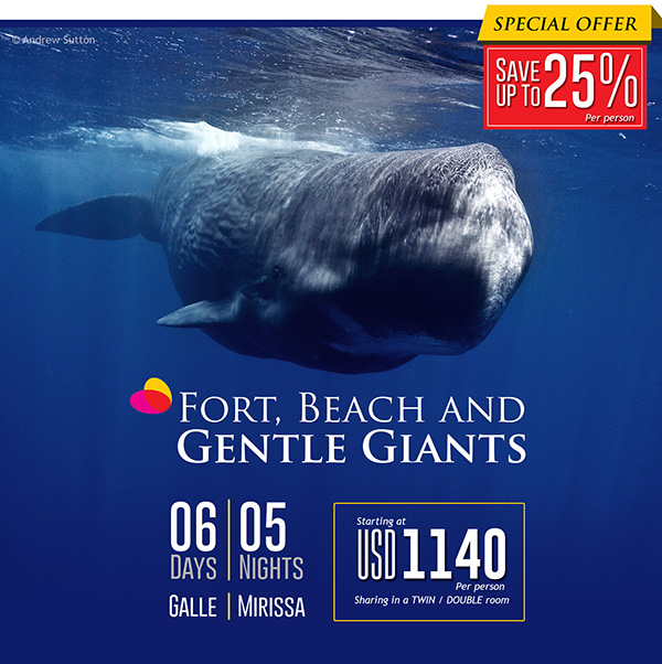 whale_wathingholiday_2016_2017
