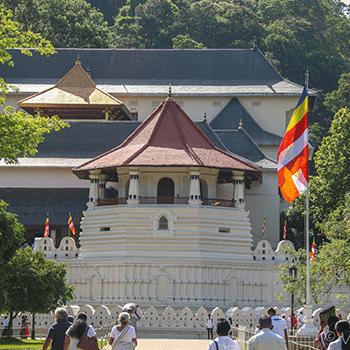 Authentic Ceylon  >